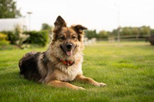 Healthy dog sitting in bright green grass