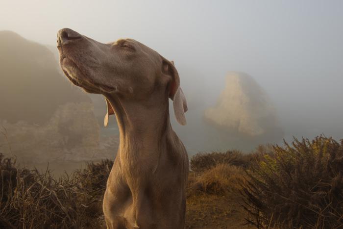 Hunting Dog Outside